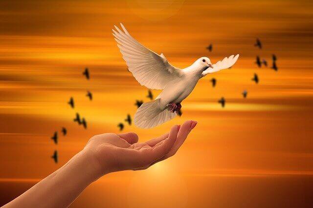 Spirituelles Weltbild - Taube die in Sonnenaufgang fliegt