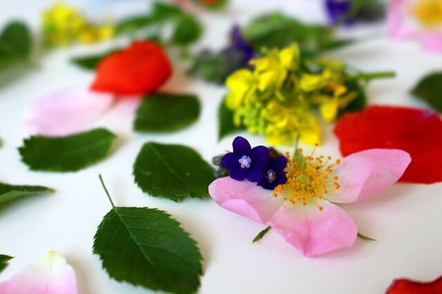 Bachblüten – Eine Einführung